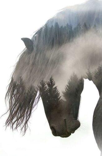 Horse Haven Agreement, Fish Creek House | Horse-Friendly B&B | Whitehall, MT