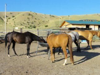 Home, Fish Creek House | Horse-Friendly B&B | Whitehall, MT