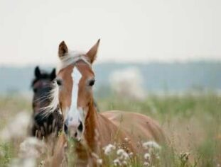 About Your Stay, Fish Creek House | Horse-Friendly B&B | Whitehall, MT