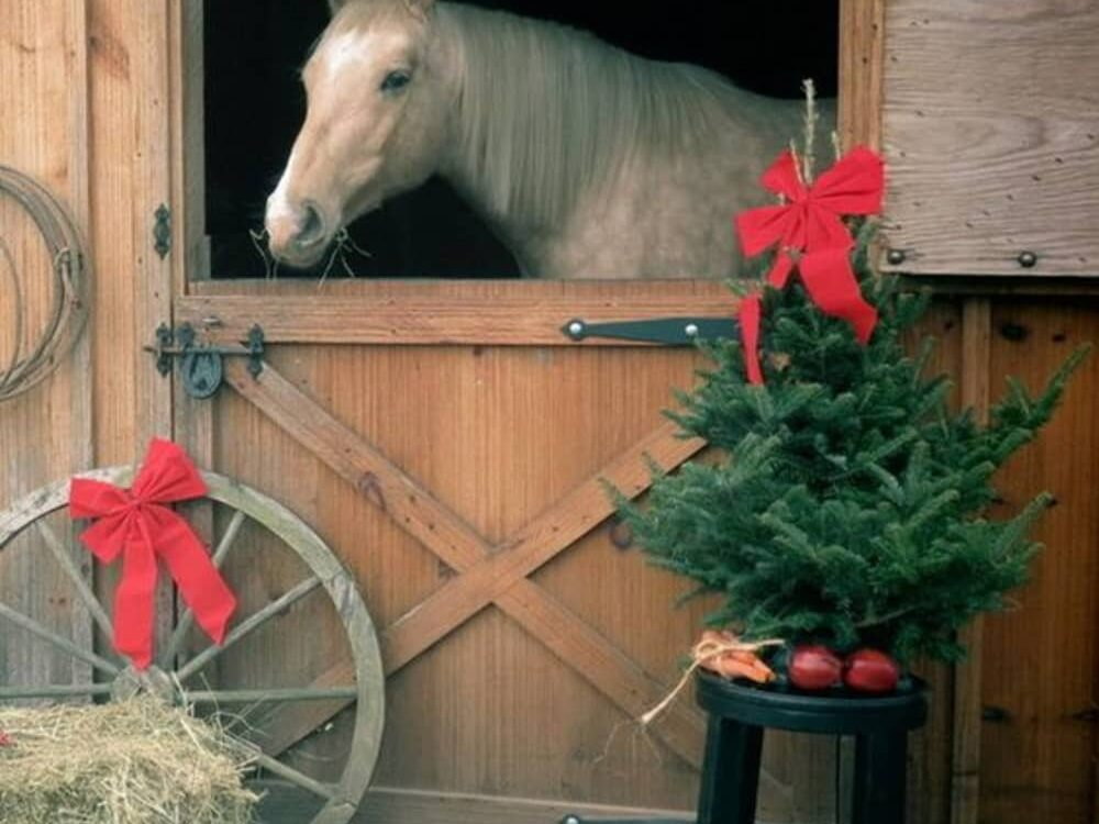Merry Christmas, Fish Creek House | Horse-Friendly B&B | Whitehall, MT